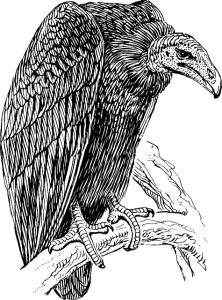 vulture-153806_640